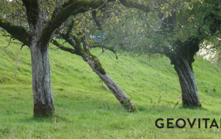 Geopathic stress radiation can cause trees to twist or slant to get away from it