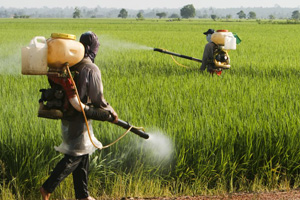 Pesticides in the environment (©123rf.com)