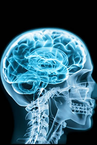 Effects of radio frequency radiation exposure on the brain and hormone levels