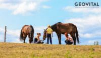 Horses are getting sick from phone tower radiation and geopathic stress