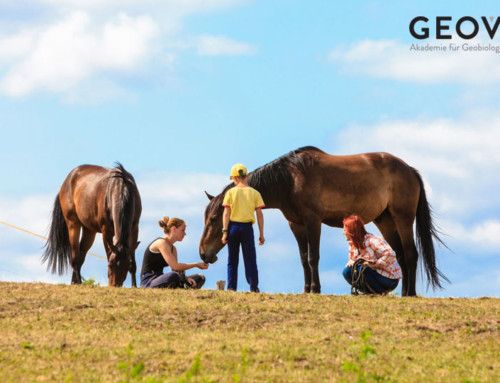 Horses get sick from phone tower radiation and geopathic stress